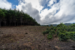 a planned farming plot with coffee, corn and forest